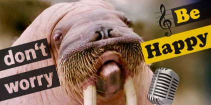 The Whistling Walruses