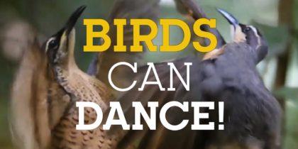 Birds can Dance!
